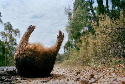 Narelle Autio, 'Wombat # 2', 2002-2015