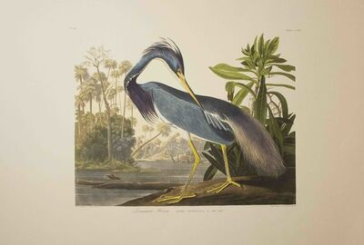 John James Audubon, 'Louisiana Heron, Edition Pl. 217', ca. 1999
