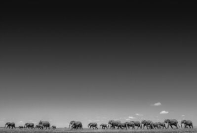 David Yarrow, 'Life On Earth'