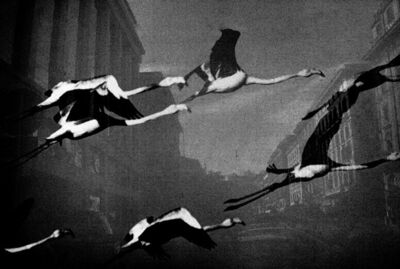 Jehsong Baak, 'Flamingoes', 1999