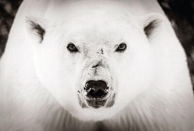 Graeme Purdy, 'Ice Bear', 2019