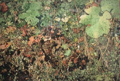 Fred Parker, 'Sonoma Vineyard', 2015