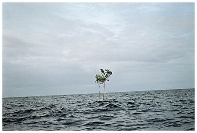 Thiago Rocha  Pitta, 'Inheritance', 2007