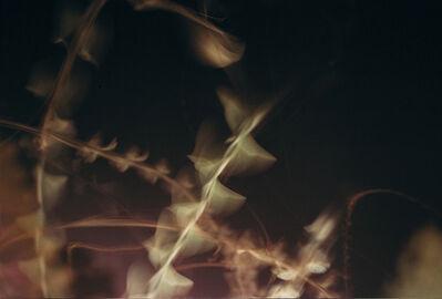 Achim Mohné, 'Fireflies', 2001/2015
