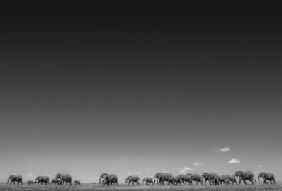 David Yarrow, 'Life On Earth', 2016