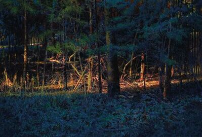 Greg Mort, 'Forest Light'