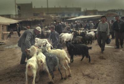 Gabriel Giovanetti, 'Kashgar:The Goats', 2000-2013