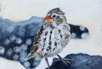 Ken Craft, 'Galapagos Medium Ground Finch', 2020