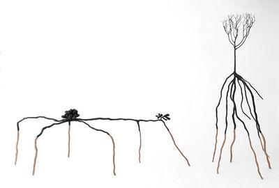 Sandra Chamberlin, 'the Mangroves', 2019