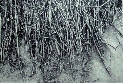 Ahmet Duru, 'Roots', 2014