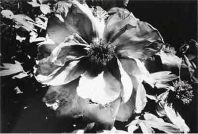 Daido Moriyama, 'Light and Shadow', 1981