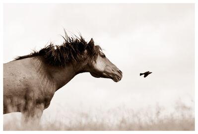 Kimerlee Curyl, 'The Flight of Honor', 2010