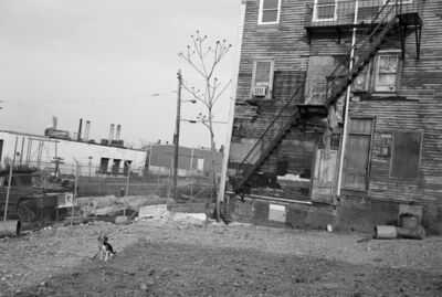 Sage Sohier, 'Beagle Tied in Vacant Lot, South Boston, Massachusetts', 1983
