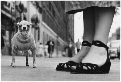Elliott Erwitt, '1. New York City. (Chihuahua)', 1946