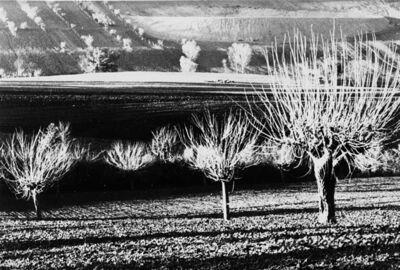 Mario Giacomelli, 'Paesaggio', 1980