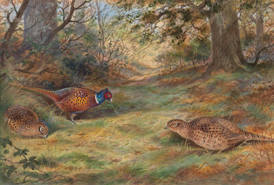 David Kristupas, 'Pheasants in a Beechwood Forest Path in the Woods', Active Contemporary