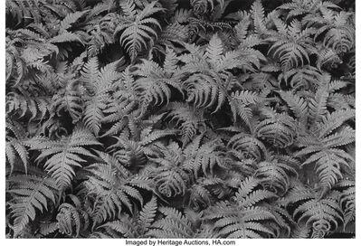 George Tice, 'Peekamoose, Twelve Original Photographs', 1971