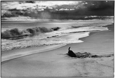 Elliott Erwitt, '14. East Hampton, NY. (Sammy at the beach)', 1998