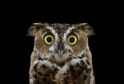 Brad Wilson, 'Great Horned Owl #3, Espanola, NM', 2011