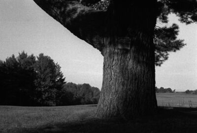 William Harting, 'Blacks Tree', 2004