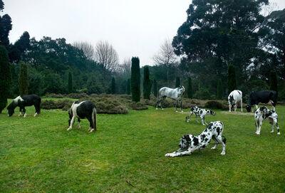 Bethan Huws, 'Black & White Animals ', 2009