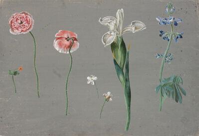 Johann Christian August Birnbaum, 'Meadow flowers on grey ground, poppy seed, white iris, delphinium and small flowers', 1782