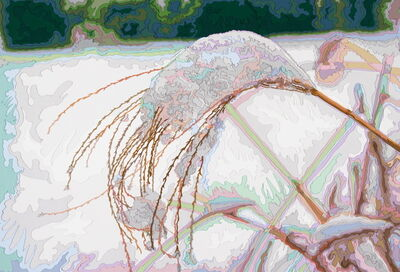 Deborah Claxton, 'Silvergrass in Winter #1', 2005