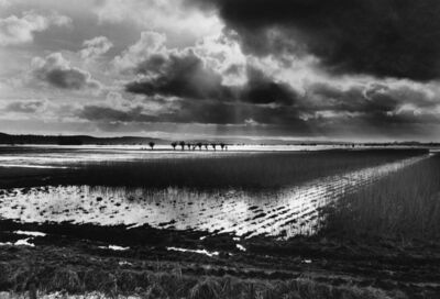 Don McCullin, 'Somerset Levels, Sedgemoor', ca. 1992