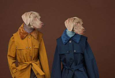 William Wegman, 'Looking Right', 2015