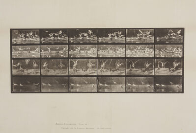 Eadweard Muybridge, 'Storks, from Animal Locomotion, Plate 777'