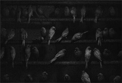 George Krause, 'Birds'