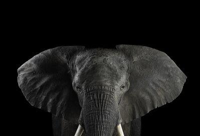 Brad Wilson, 'African Elephant #1, Los Angeles, CA', 2010