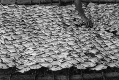 Graciela Iturbide, 'Pescaditos de Oaxaca ', 1992-2005