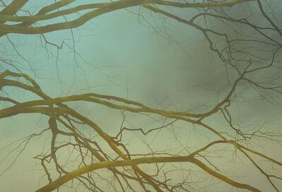 Johan Abeling, 'Branches', 2015