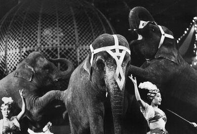 Akira Tanno, 'Elephants from the series Circus', 1956, 1957, vintage print