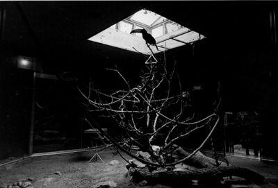 Wang Dongwei 王东伟, 'Hornbill', 2012
