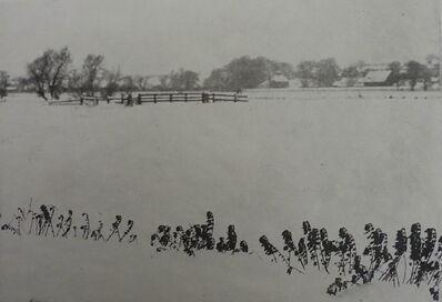 P. H. Emerson, 'Marsh Weeds', 1895