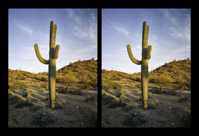 Mark Klett, 'Two Saguaros Posing as One', 2016