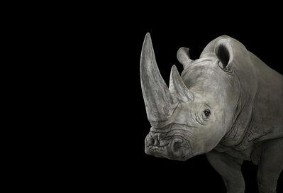Brad Wilson, 'White Rhinoceros #1, Albuquerque, NM', 2013