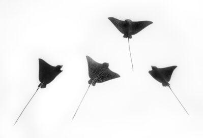 Cristina Mittermeier, 'Ocean Dance', Unknown