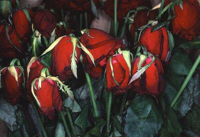 Nobuyoshi Araki, 'Flower Rondeau', 1997