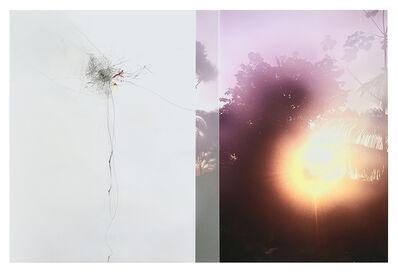 Sandi Haber Fifield, 'Untitled (LF16#146)', 2016