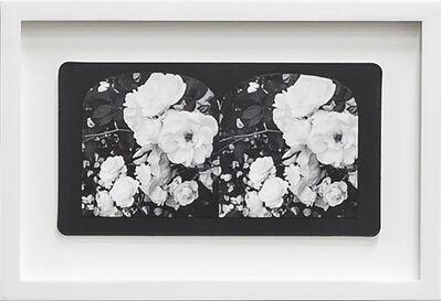 Penelope Stewart, 'Ruin Gazing Vol 1, paradise gardens - No: 004 - Iceberg Roses, Santa Barbara, framed stereoscopic cards created by artist', 2015