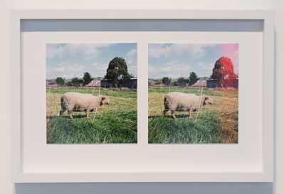Alice Shaw, 'Lambscapes Stereo #1', 2017-2018