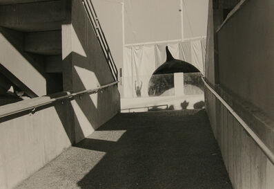 Ken Graves, 'Killer Whale, Miami Beach, FL', 1981