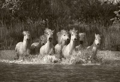 Sarah Corbin, 'Galloping Through the Marsh'