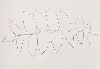 Ellsworth Kelly, 'Ailanthus Leaves I (Vernis de japon I)', 1965-1966