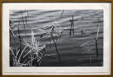 João Penalva, 'Reeds II', 2004