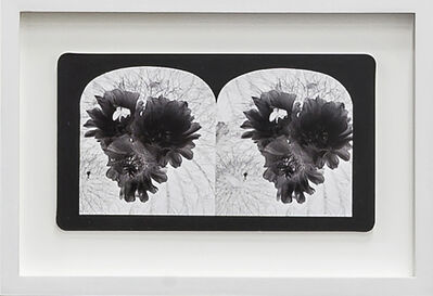 Penelope Stewart, 'Ruin Gazing Vol 1, paradise gardens - No: 022 - Bee on the cactus flower, framed stereoscopic cards created by artist', 2015