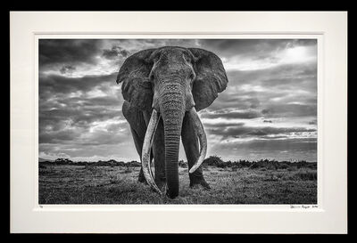 David Yarrow, 'Giant', 2020 (limited edition)